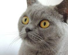 Kot, pies czy rybka – jakie zwierzę będzie najłatwiejsze w utrzymaniu?
