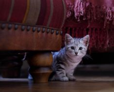 Kocie zabawy i kocie jedzenie – czego wymaga posiadanie zwierzaka?