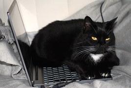 Kot nie musi przeszkadzać w pracy. Źródło: Pixabay.com.