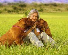 Czym karmić duże psy, by były zdrowe?