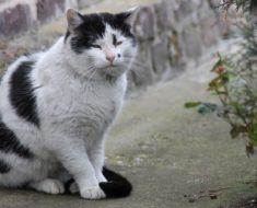 Sterylizacja kotów – czy warto?