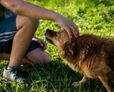 Jak się bawić z psem?