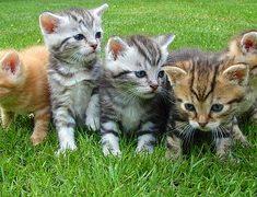 Jaka karma dla kociaka?