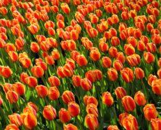 Praca w Holandii – najbardziej opłacalny kierunek?
