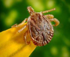 Letnie choroby – na co uważać?