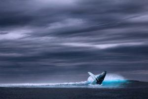 Niebieski wieloryb był i jest w tym roku nośną historią na wielu kontynentach. Źródło: Pixabay.com.