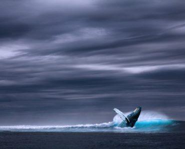 Niebieski wieloryb – przerażająca historia czy mit?