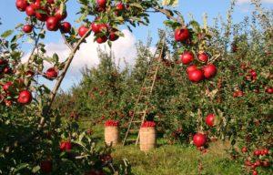 Praca przy warzywach, owocach - tam Ukraińcy stanowią największą część pracowników. Źródło: Pixabay.com.